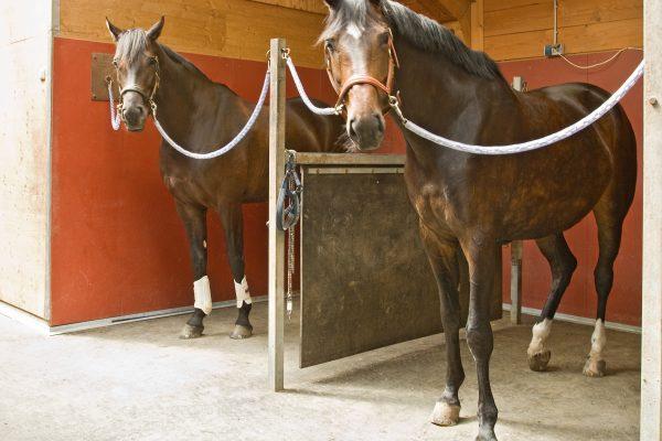 At yatağı ve altlığı